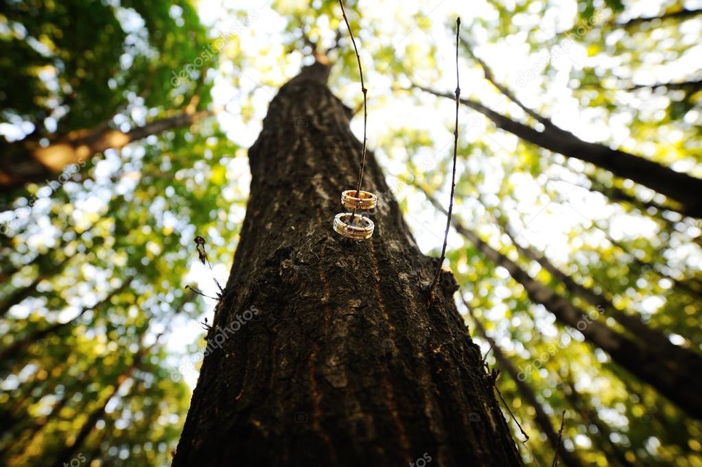 Wedding Rings On A Tree Branch Stock Photo C Kalinovskiy 86437898