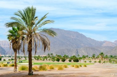 Palm trees on a background of mountains