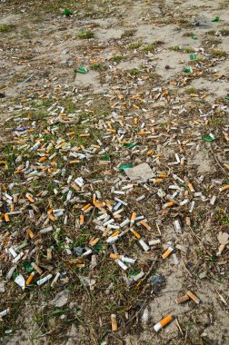 Cigarette butts on the lawn of the city in the spring after the snow melts