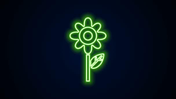 Ragyogó neon vonal Virág ikon elszigetelt fekete háttér. 4K Videó mozgás grafikus animáció