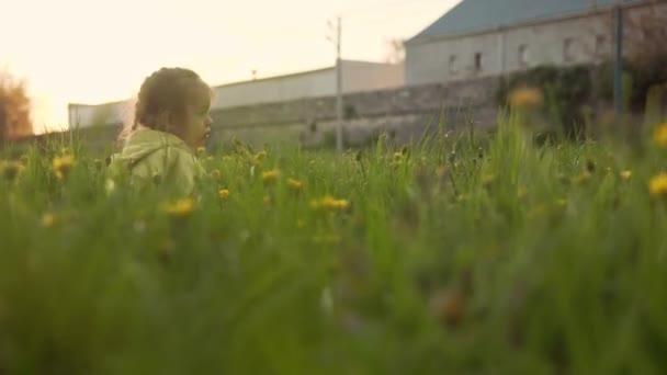 Autentické roztomilé školka holčička ve žluté šedé sbírat pampeliška květiny v parku na trávě při jarním západu slunce. dítě v přírodě během východu slunce. Dětství, rodičovství, rodina, koncepce životního stylu