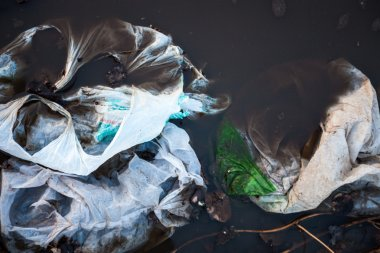 Plastic bags in the water