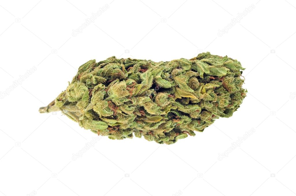 Cannabis bud isolated on white