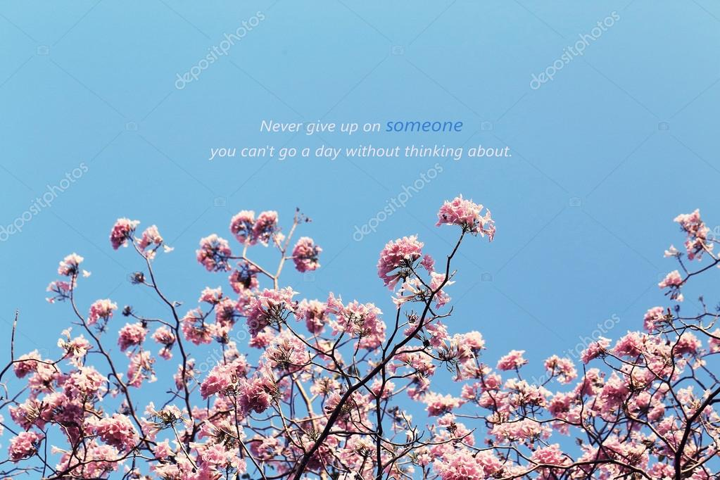 C Stock Quote Prepossessing Inspirational Typographic Quote  Never Give Up On Someone You C