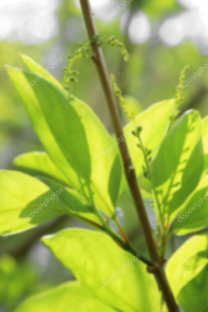 Blurred image of young green leaf in sunlight, natural background