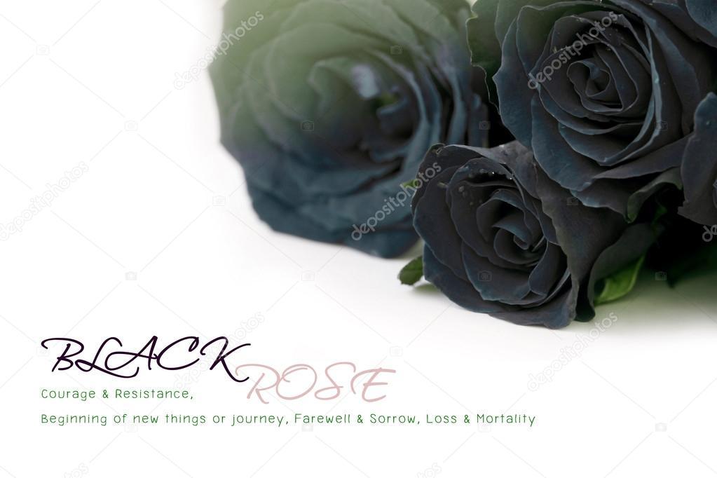Bouquet Di Rose Nere Con Testo Di Esempio Su Priorità Bassa Bianca