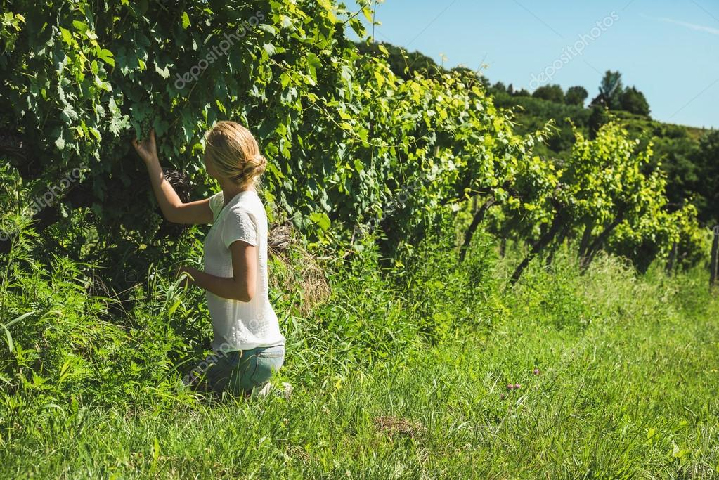 Young lady picking grapes