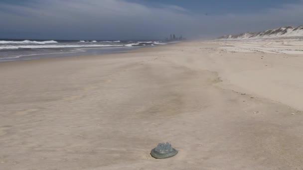 medúza és a stranddal és a háttér szállodák a gold coast, queensland, Ausztrália