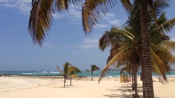 Beach In Isabela Galapagos Islands Ecuador