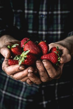 Man holding fresh strawberries in hands