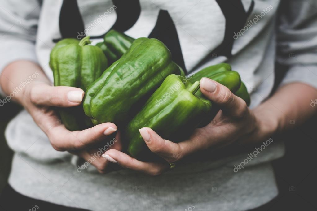 Green peppers in farmer hands