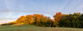 Panorama of a green field with an autumn forest in the background