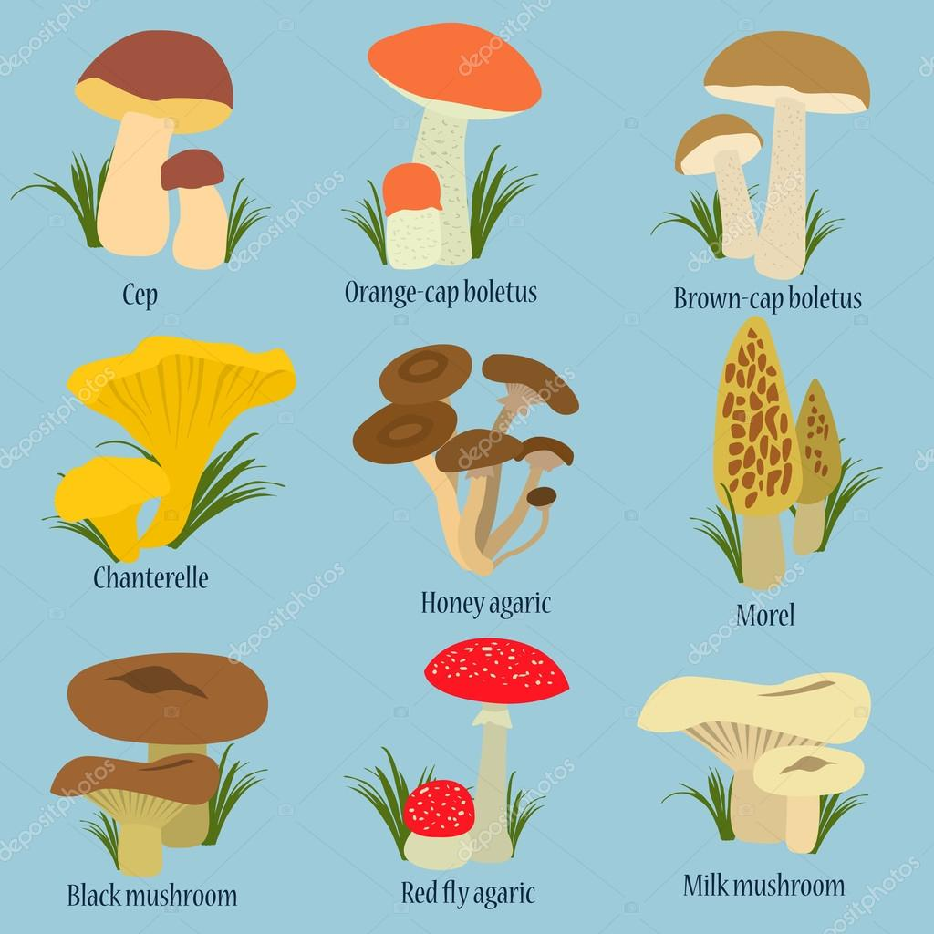 Collection of mushrooms with names in flat design — Stock Vector ...