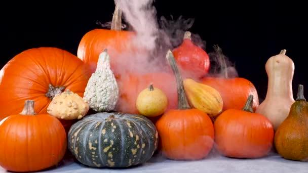 Pumpkin podzim Halloween a díkůvzdání scenérie stůl horní pohled, obklopen mlhavou mlhou. Stůl top pohled s různými druhy dýní a zeleniny. Jasná scéna Díkůvzdání.