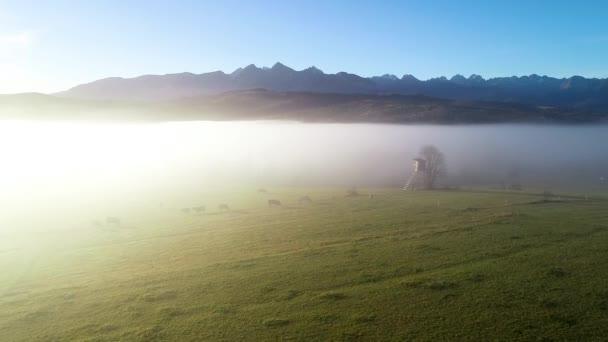 Horská krajina s ranní mlhou, letecký výhled. Tatranské vysoké hory za slunečného rána po východu slunce. Alpská krajina po úsvitu. Pohled z ptačí perspektivy na mlhavý les a vysoké hory v pozadí.