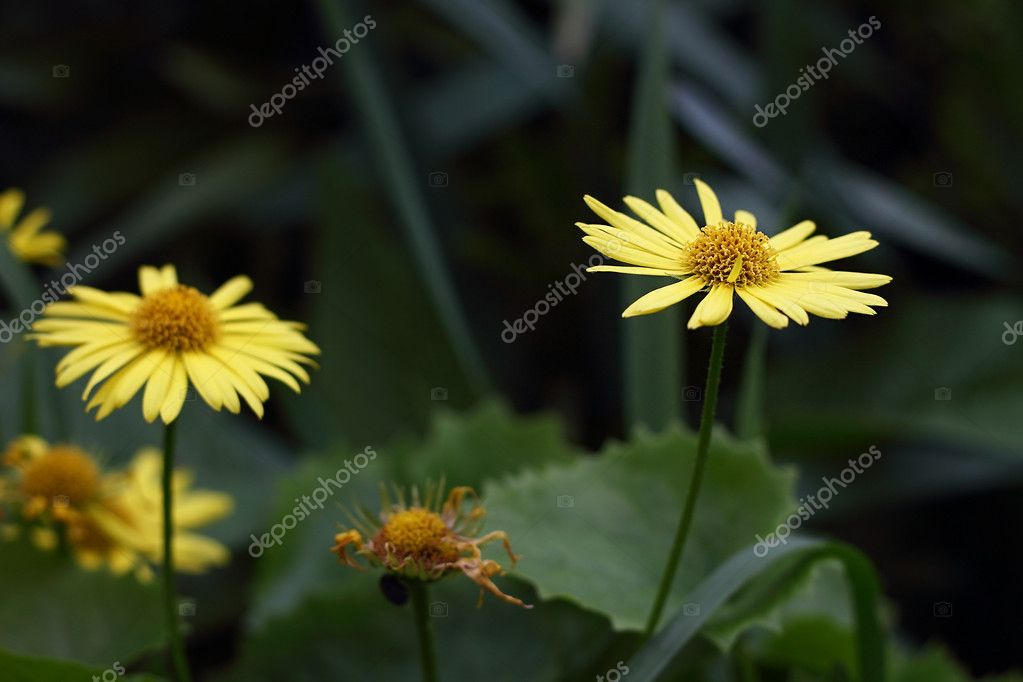 Small yellow flowers on the background bokeh stock photo small yellow flowers on the background bokeh stock photo mightylinksfo