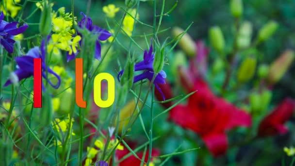 Imádom az sms-edet. Szivárvány színek. Fényes virágok háttér