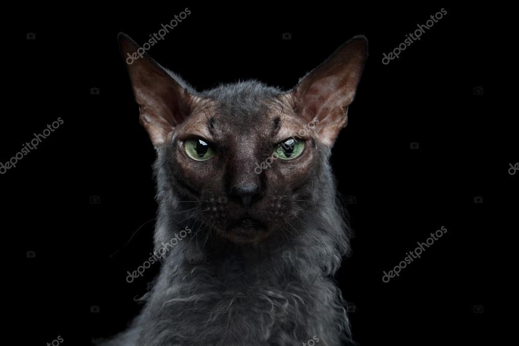 Close up noir chatte photo