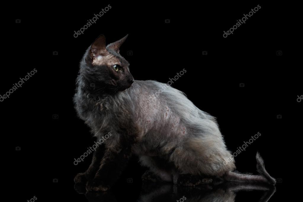 Nahá černá chlupatá kočička