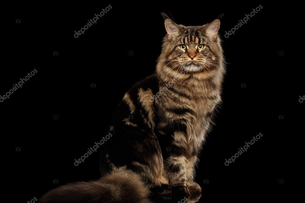 Kočička velký chlupatý