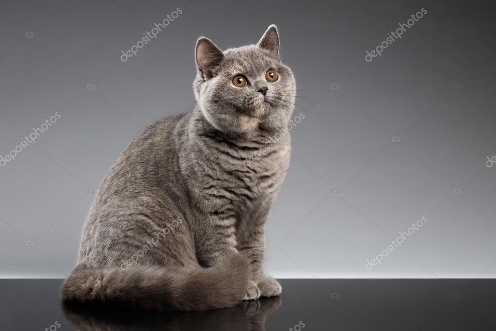 sólo černá kočička fotky