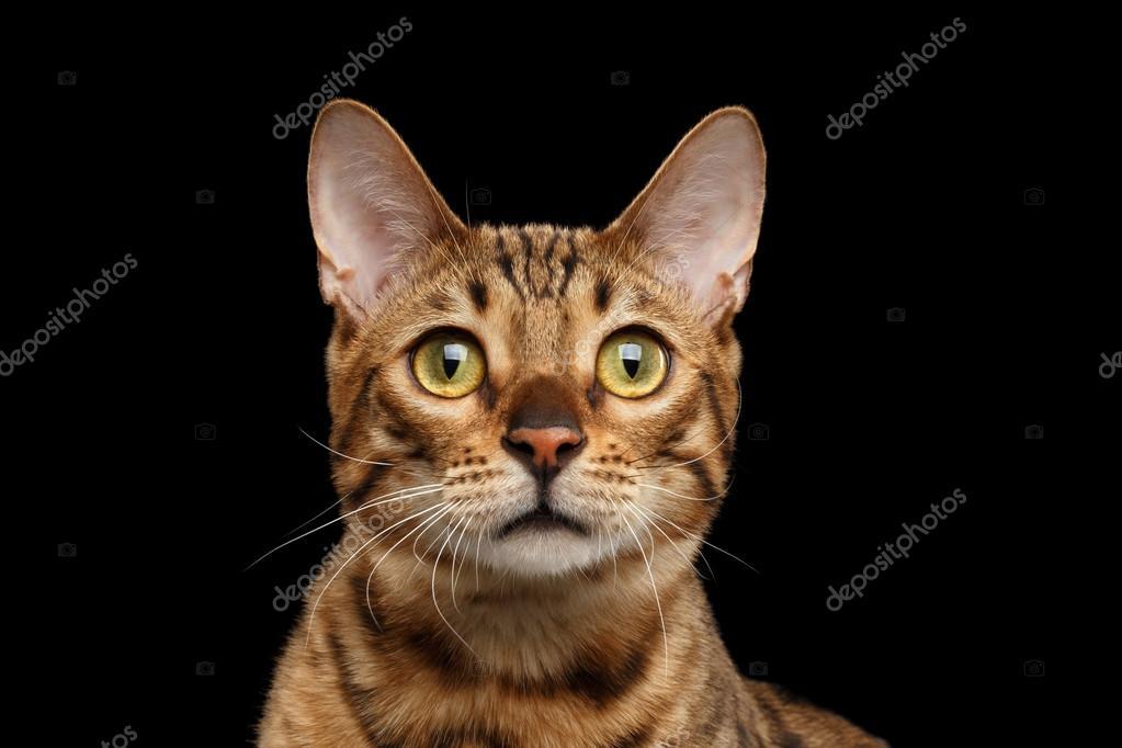 noir chatte gros plans pics