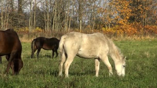 Eine Herde Pferde frisst an einem sonnigen Tag das Gras auf der Blumenwiese. Perfektes Streicheln des Pferdes auf der Weide. Nutztiere - ein Symbol des ländlichen Lebens auf einer Ranch.