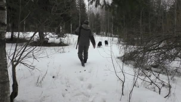 Hunter in a snowy forest with a gun and hunting dogs. Winter hunting season in Europe.