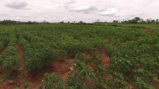 Letecký pohled na kasava farmy