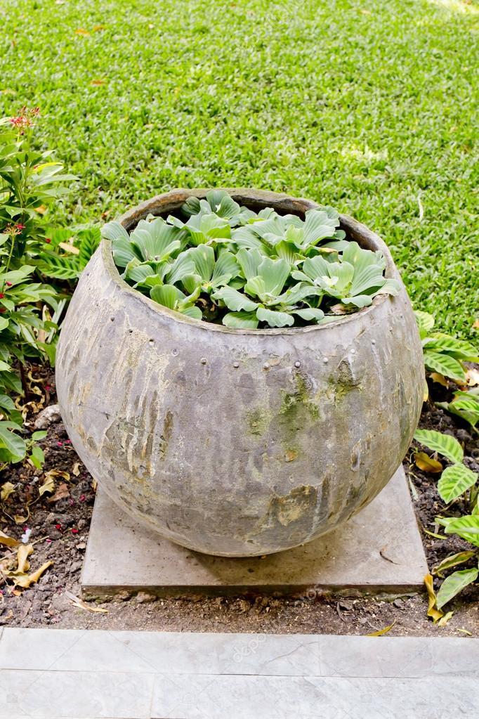 Kleine Pflanzen Sind In Glas Wasser Im Garten Einpflanzen