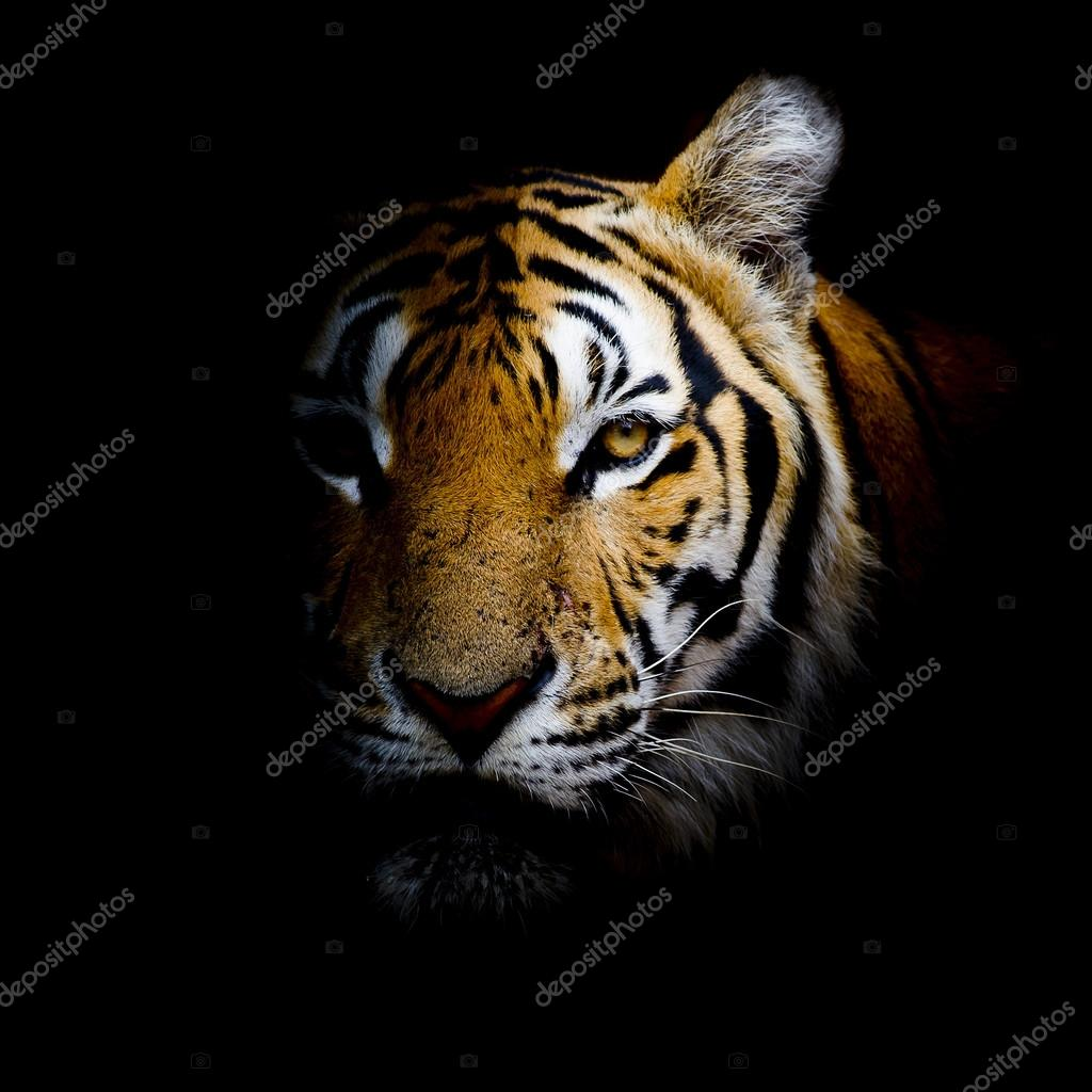 tiger background — stock photo © art9858 #65127259