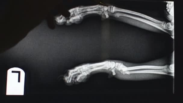 Veterinární lékař vysvětlující rentgenového snímku