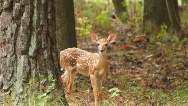 Rehkitz versteckt sich im Wald