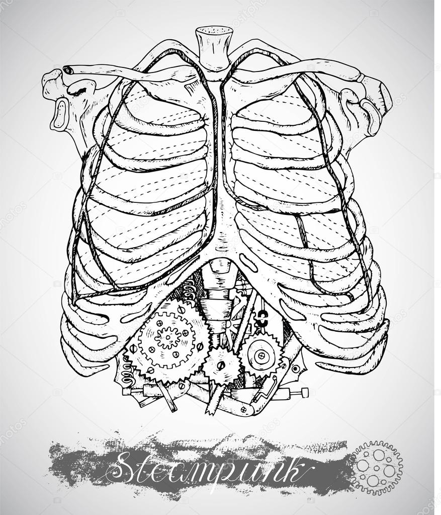 Humano pecho con mecanismo vintage en las costillas — Vector de ...