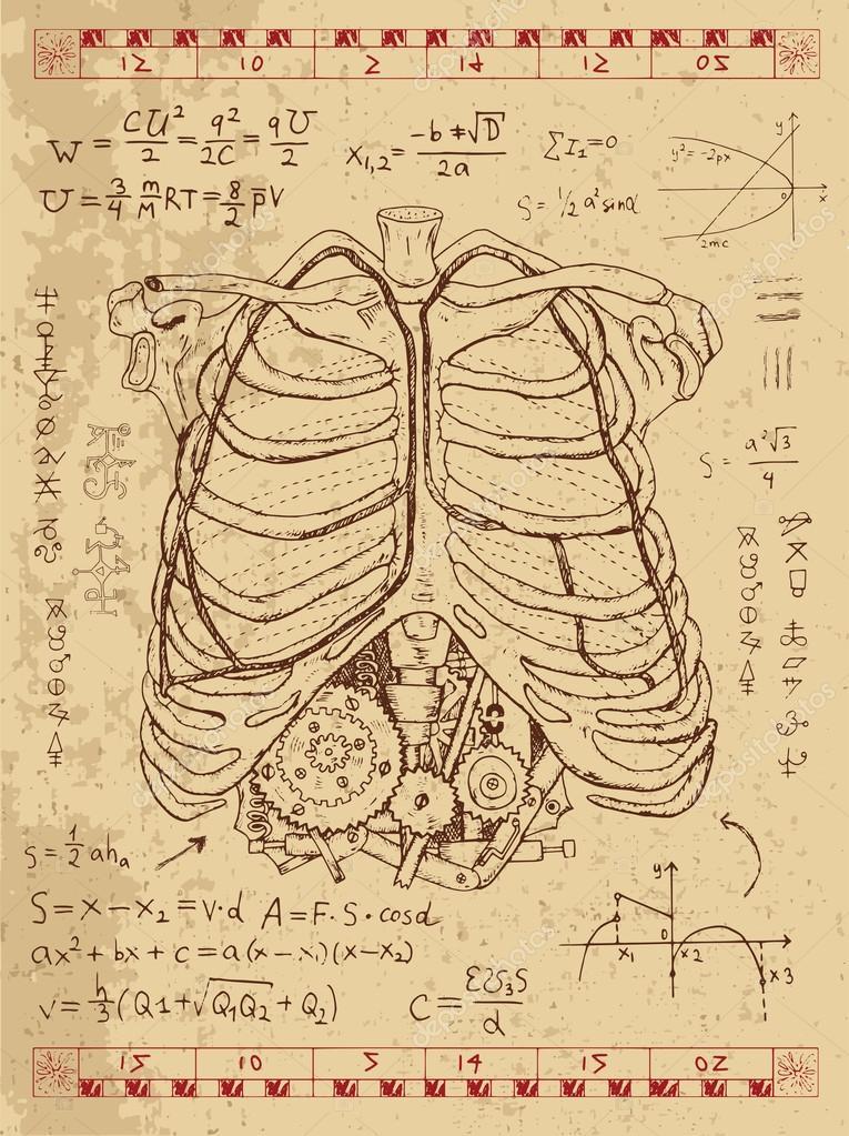 Conjunto de dibujos con el pecho humano, huesos — Vector de stock ...