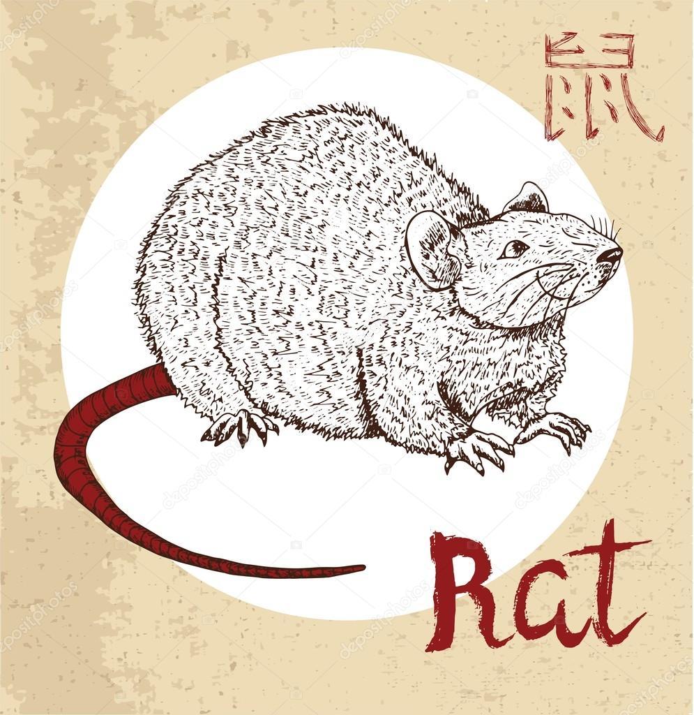 Chinese Zodiac Symbol Of Rat Samiramay
