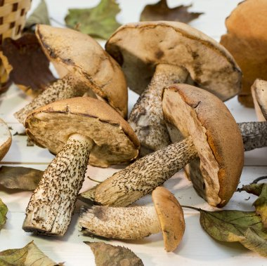 Mushrooms with leaves
