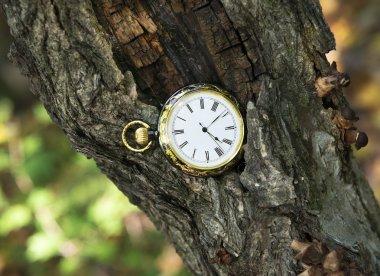 Antique clock on tree