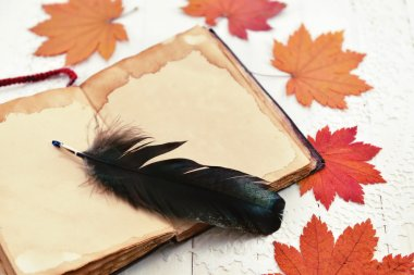 Autumn still life with quill