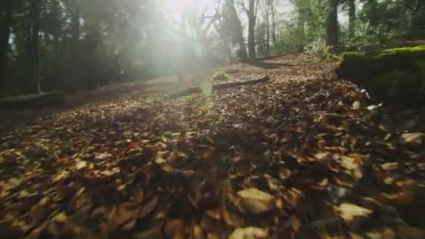 Camera hovers over leafy ground in a forest