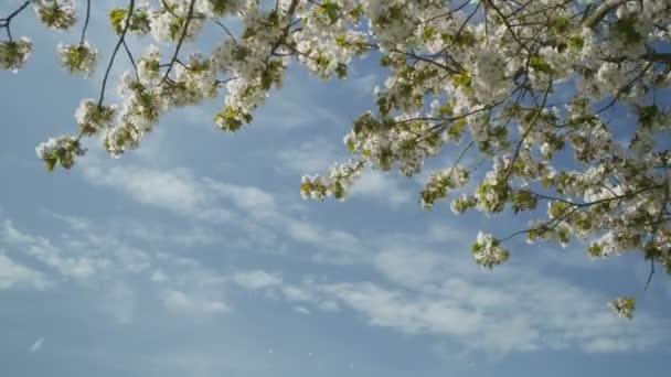 Květy z strom ve větru
