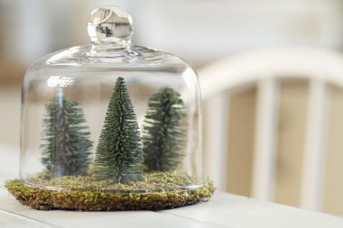 pines and moss under a cloche