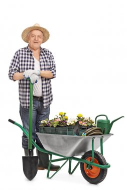 Full length portrait of a mature gardener posing behind a wheelbarrow full of flowers and gardening equipment isolated on white background stock vector