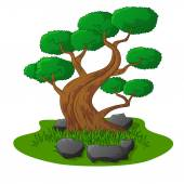 Beautiful bonsai tree isolated