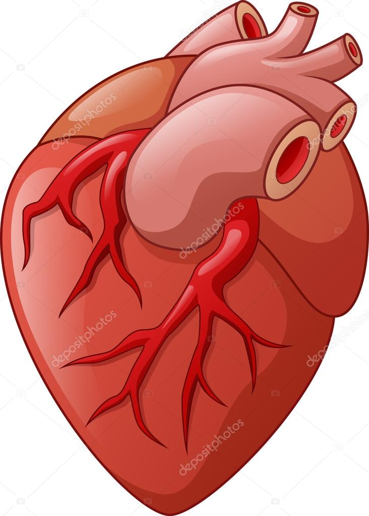 Illustration de dessin anim de coeur humain image - Dessin coeur humain ...