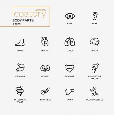 Body parts modern simple thin line design icons, pictograms set