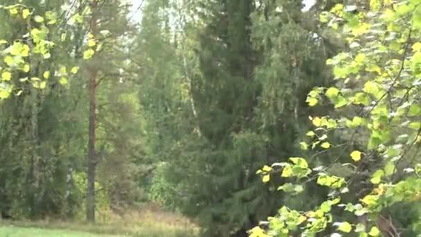 Lesní krajina na samém začátku podzimu.