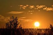 Letní jasný západ slunce na divokém poli.