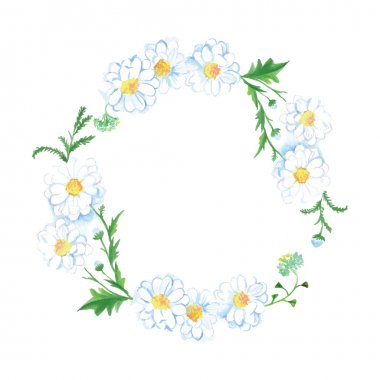 White meadow camomile vector design frame
