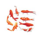 Koi ryby vektorových grafických prvků